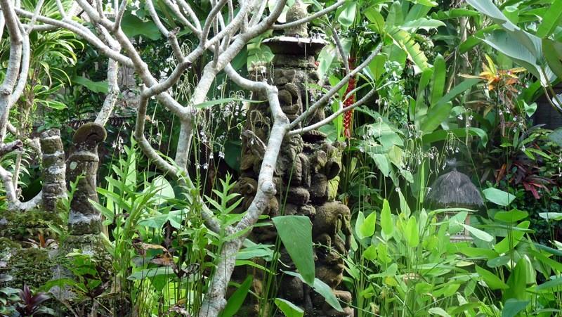 Richesses de la flore Indonésienne