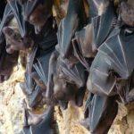La grotte des chauve-souris de Goa Lawah