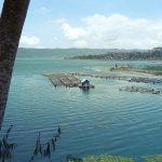 Élevages de poissons à Trunyan - Batur
