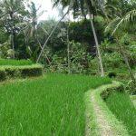 Le long de la rivière Pakrisan - Gunung Kawi - Bali