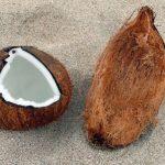 Une noix de coco à Sanur