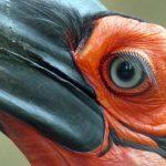 Peliatan et le Parc des Oiseaux