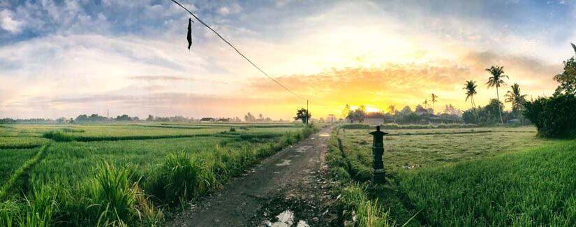 Panorama sur les rizières le matin à Ubud